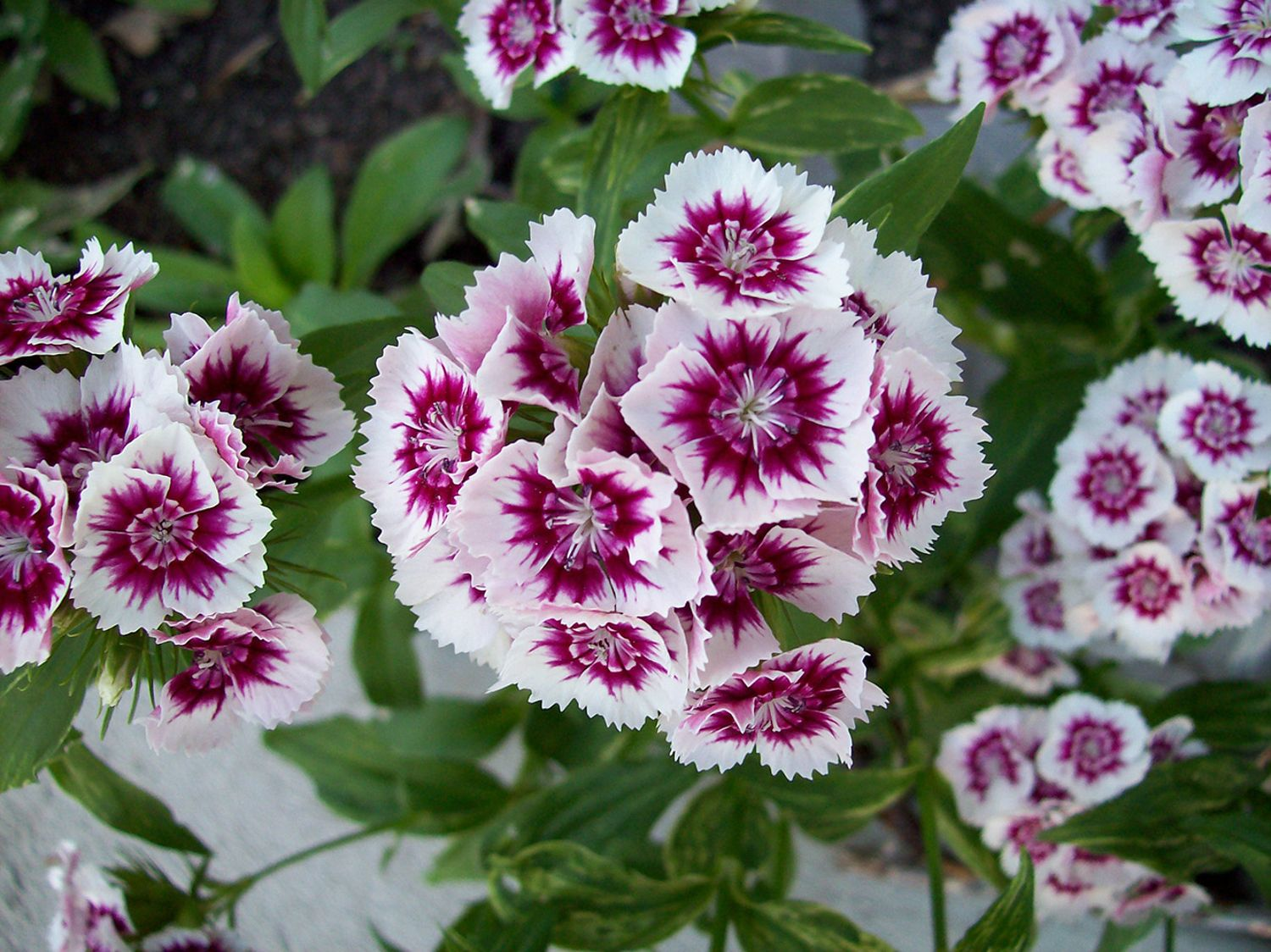 The complete guide to growing annual flowers greenhouse stores izmirmasajfo