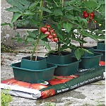 Pots, Bags or Border Growing? Which is best?