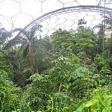How Can We Maintain the Humidity Inside a Greenhouse?