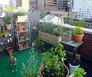 How To Create Your Perfect Balcony Garden
