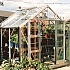 Elite Belmont 8x6 Greenhouse with Double Doors