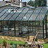 Elite Classique 18x12 Greenhouse in Green